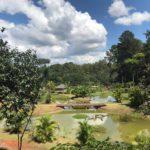 Jardim Botânico faz vídeos para celebrar Dia Mundial do Meio Ambiente