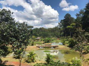 Meio Ambiente Jardim Botânico